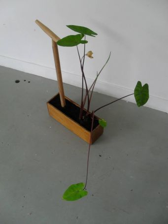 UITLAATTUIN_-_model_colocasia